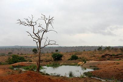 Fotoalbum von Malindi.info - Tsavo West/East Safari im März 2009[ Foto 48 von 140 ]
