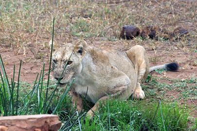 Fotoalbum von Malindi.info - Tsavo West/East Safari im März 2009[ Foto 49 von 140 ]