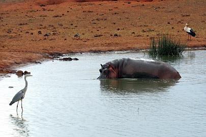 Fotoalbum von Malindi.info - Tsavo West/East Safari im März 2009[ Foto 53 von 140 ]