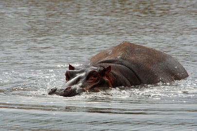 Fotoalbum von Malindi.info - Tsavo West/East Safari im März 2009[ Foto 54 von 140 ]
