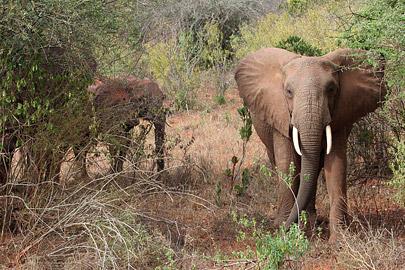 Fotoalbum von Malindi.info - Tsavo West/East Safari im März 2009[ Foto 57 von 140 ]