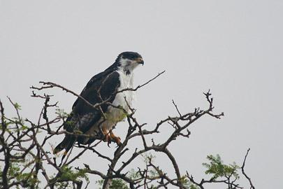 Fotoalbum von Malindi.info - Tsavo West/East Safari im März 2009[ Foto 60 von 140 ]