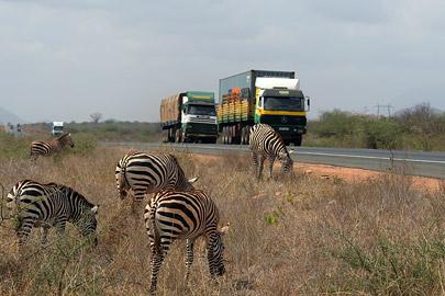 Fotoalbum von Malindi.info - Tsavo West/East Safari im März 2009[ Foto 65 von 140 ]