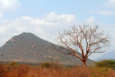 Fotoalbum von Malindi.info - Tsavo West/East Safari im März 2009[ Foto 68 von 140 ]