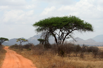 Fotoalbum von Malindi.info - Tsavo West/East Safari im März 2009[ Foto 78 von 140 ]