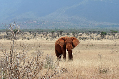 Fotoalbum von Malindi.info - Tsavo West/East Safari im März 2009[ Foto 79 von 140 ]