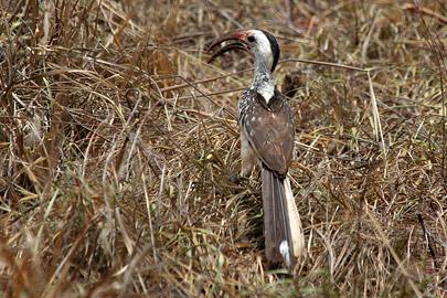 Fotoalbum von Malindi.info - Tsavo West/East Safari im März 2009[ Foto 85 von 140 ]