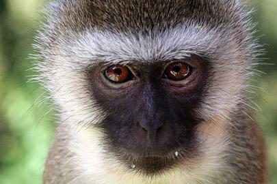 Fotoalbum von Malindi.info - Tsavo West/East Safari im März 2009[ Foto 92 von 140 ]