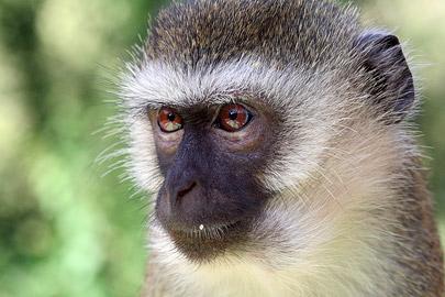 Fotoalbum von Malindi.info - Tsavo West/East Safari im März 2009[ Foto 93 von 140 ]