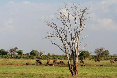 Fotoalbum von Malindi.info - Tsavo West/East Safari im März 2009[ Foto 100 von 140 ]