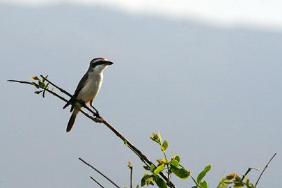 Fotoalbum von Malindi.info - Tsavo West/East Safari im März 2009[ Foto 101 von 140 ]