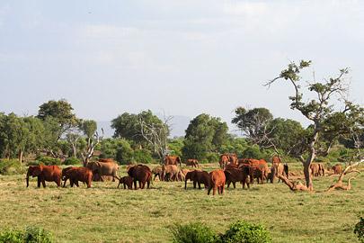 Fotoalbum von Malindi.info - Tsavo West/East Safari im März 2009[ Foto 102 von 140 ]