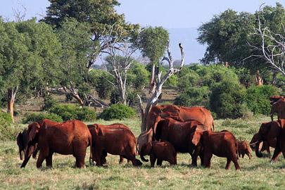 Fotoalbum von Malindi.info - Tsavo West/East Safari im März 2009[ Foto 103 von 140 ]