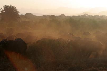 Fotoalbum von Malindi.info - Tsavo West/East Safari im März 2009[ Foto 107 von 140 ]