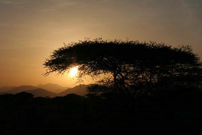 Fotoalbum von Malindi.info - Tsavo West/East Safari im März 2009[ Foto 109 von 140 ]