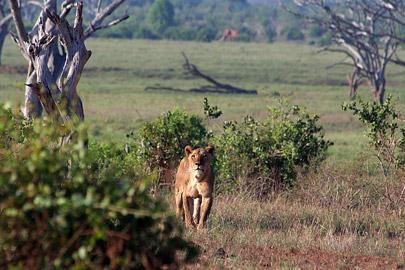 Fotoalbum von Malindi.info - Tsavo West/East Safari im März 2009[ Foto 113 von 140 ]
