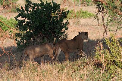 Fotoalbum von Malindi.info - Tsavo West/East Safari im März 2009[ Foto 116 von 140 ]