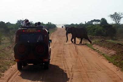 Fotoalbum von Malindi.info - Tsavo West/East Safari im März 2009[ Foto 120 von 140 ]
