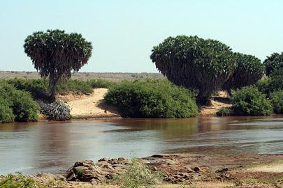 Fotoalbum von Malindi.info - Tsavo West/East Safari im März 2009[ Foto 125 von 140 ]