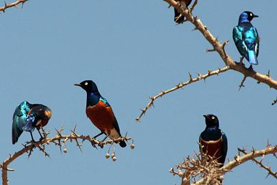 Fotoalbum von Malindi.info - Tsavo West/East Safari im März 2009[ Foto 132 von 140 ]