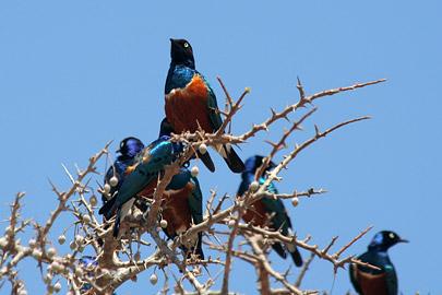 Fotoalbum von Malindi.info - Tsavo West/East Safari im März 2009[ Foto 133 von 140 ]