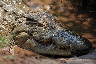 Fotoalbum von Malindi.info - Tsavo West/East Safari im März 2009[ Foto 138 von 140 ]