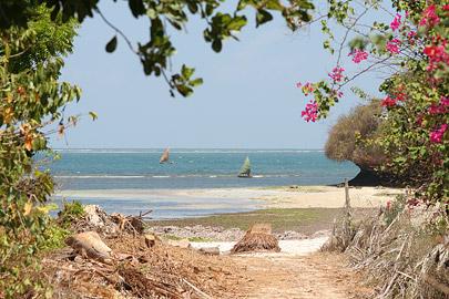 Fotoalbum von Malindi.info - Malindi Marine Park 2009[ Foto 4 von 59 ]