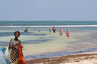 Fotoalbum von Malindi.info - Malindi Marine Park 2009[ Foto 6 von 59 ]