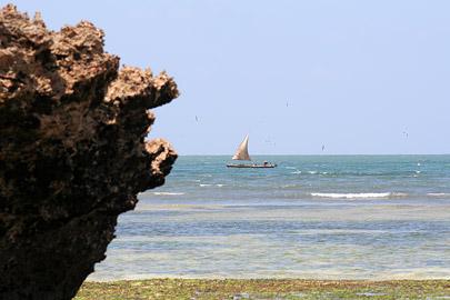 Fotoalbum von Malindi.info - Malindi Marine Park 2009[ Foto 7 von 59 ]