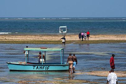 Fotoalbum von Malindi.info - Malindi Marine Park 2009[ Foto 9 von 59 ]