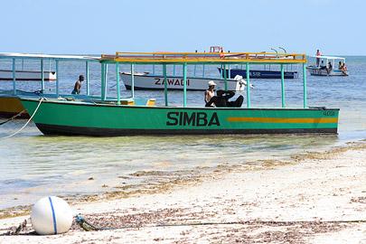 Fotoalbum von Malindi.info - Malindi Marine Park 2009[ Foto 37 von 59 ]