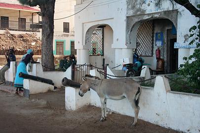 Fotoalbum von Malindi.info - Ausflug nach Lamu Island 2009[ Foto 12 von 124 ]