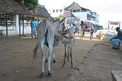 Fotoalbum von Malindi.info - Ausflug nach Lamu Island 2009[ Foto 15 von 124 ]