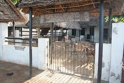 Fotoalbum von Malindi.info - Ausflug nach Lamu Island 2009[ Foto 16 von 124 ]