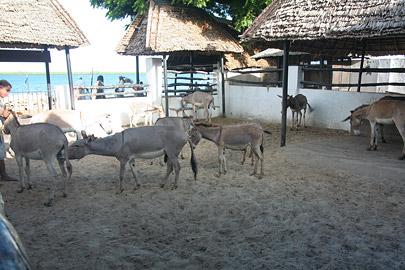 Fotoalbum von Malindi.info - Ausflug nach Lamu Island 2009[ Foto 17 von 124 ]