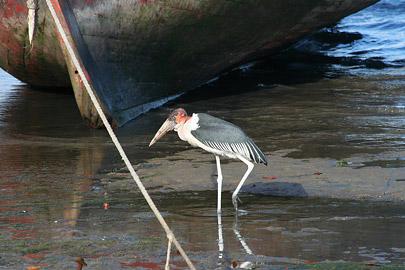 Fotoalbum von Malindi.info - Ausflug nach Lamu Island 2009[ Foto 27 von 124 ]
