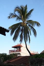 Fotoalbum von Malindi.info - Ausflug nach Lamu Island 2009[ Foto 45 von 124 ]