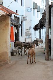 Fotoalbum von Malindi.info - Ausflug nach Lamu Island 2009[ Foto 47 von 124 ]