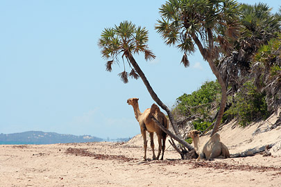 Fotoalbum von Malindi.info - Ausflug nach Lamu Island 2009[ Foto 104 von 124 ]