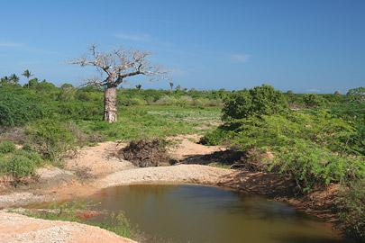 Fotoalbum von Malindi.info - Ausflug nach Lamu Island 2009[ Foto 122 von 124 ]