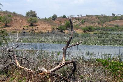 Fotoalbum von Malindi.info - LMagiro Farm und Lake Chem Chem 2009[ Foto 37 von 61 ]