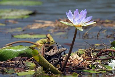 Fotoalbum von Malindi.info - LMagiro Farm und Lake Chem Chem 2009[ Foto 44 von 61 ]