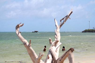 Fotoalbum von Malindi.info - Malindi Marine Park im September 2010[ Foto 26 von 43 ]