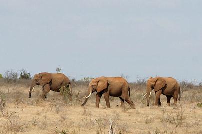 Fotoalbum von Malindi.info - Safari Tsavo East/West 2010[ Foto 14 von 145 ]