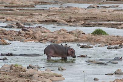 Fotoalbum von Malindi.info - Safari Tsavo East/West 2010[ Foto 19 von 145 ]