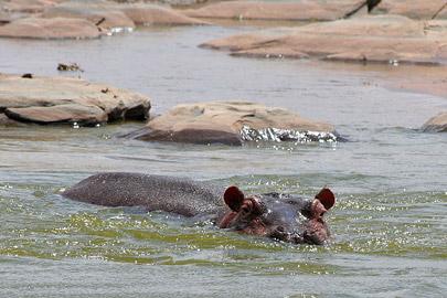 Fotoalbum von Malindi.info - Safari Tsavo East/West 2010[ Foto 22 von 145 ]