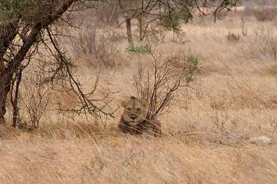 Fotoalbum von Malindi.info - Safari Tsavo East/West 2010[ Foto 32 von 145 ]