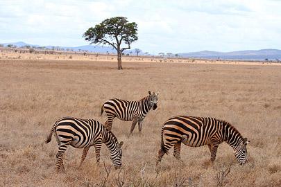 Fotoalbum von Malindi.info - Safari Tsavo East/West 2010[ Foto 33 von 145 ]