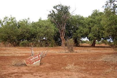 Fotoalbum von Malindi.info - Safari Tsavo East/West 2010[ Foto 36 von 145 ]
