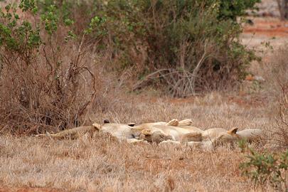 Fotoalbum von Malindi.info - Safari Tsavo East/West 2010[ Foto 40 von 145 ]